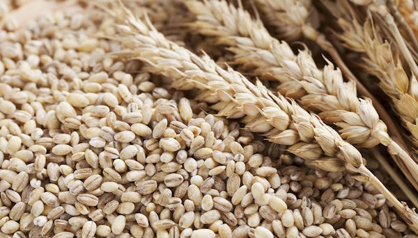 Making the Right Choice When it Comes to Grains